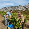 Res Fortes Wines - Moritz Bak
