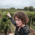 Les vignes de Coulous - Pauline Lapierre