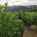 Vignoble Réveille - France Crispeels